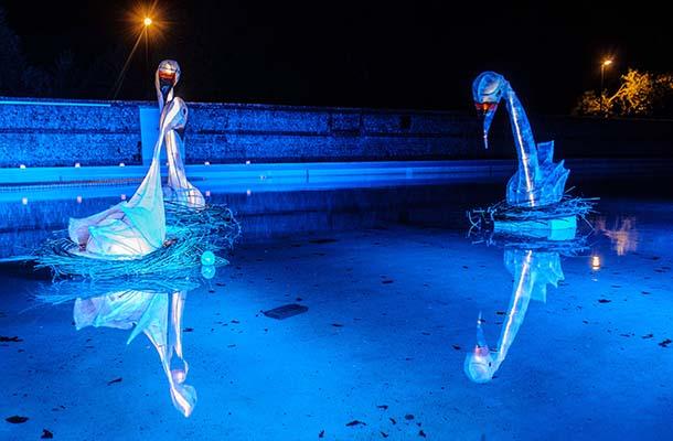 Blue Illuminated Swans Floating Pells Pool Festival Of Light Nulty