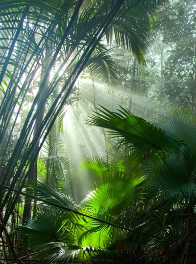 Rainforest Light Seeping Through Lighting Memories