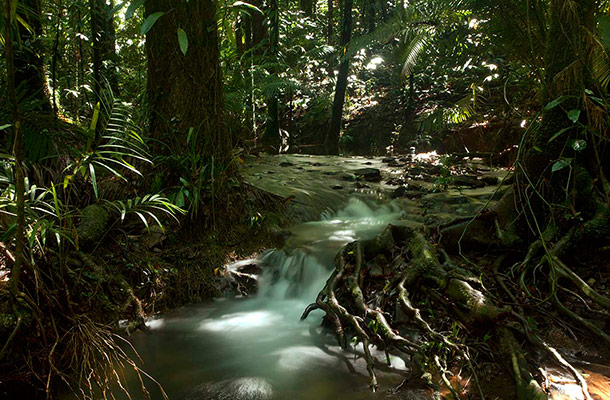 Rainforest Floor Density Powerful Lighting