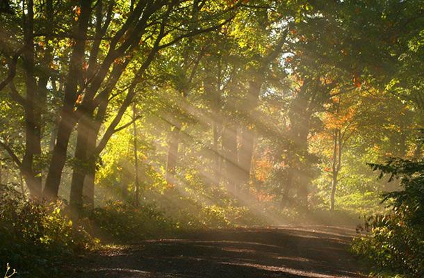 Sunlit Woodland Scene Landscape Design Inspiration