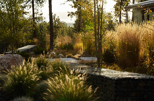 Landscape Design Backlit Tall Grasses Planting