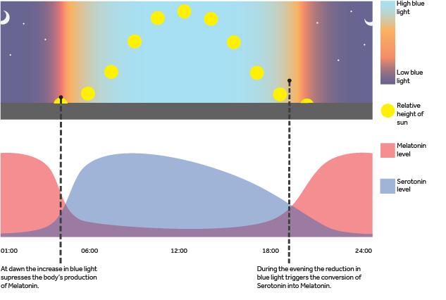 Diagram Blue Light Circadian Rhythm Nulty